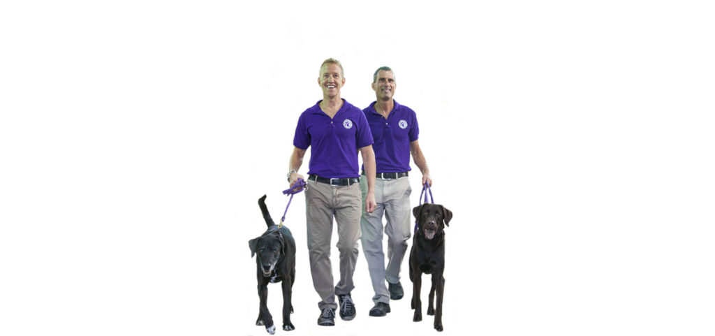 Pet Shop Franchise