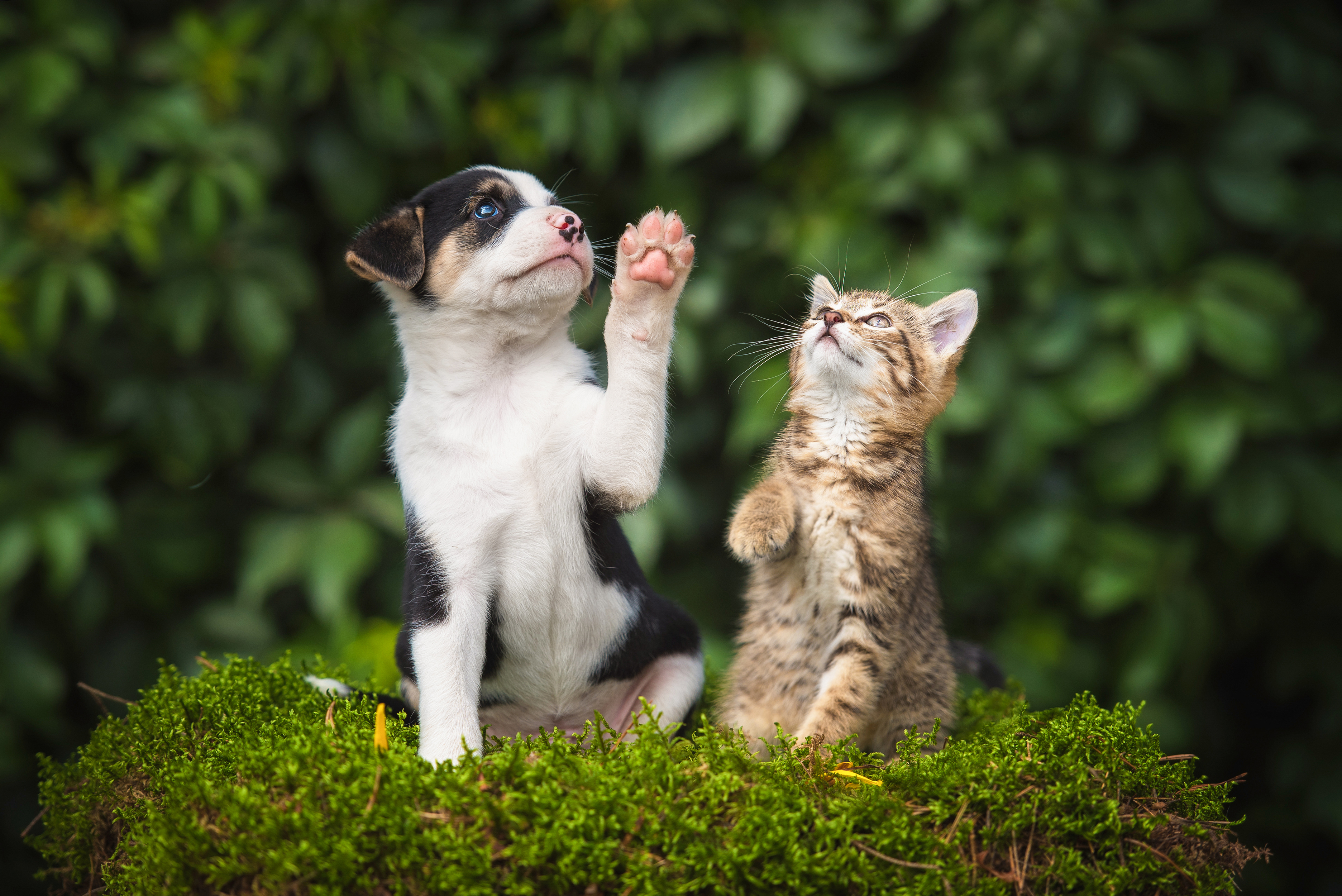 cat and dog images for a pet franchise
