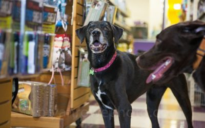 Starting your own Pet Store Franchise this Holiday Season