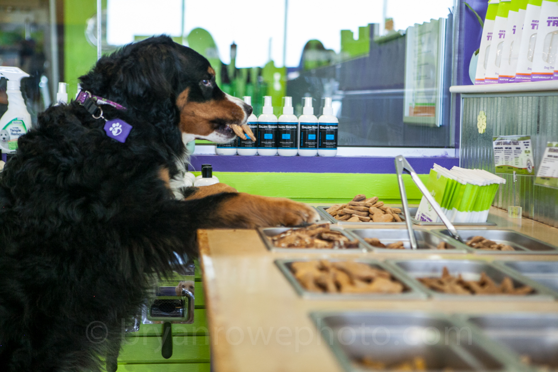 Wag N' Wash pet store franchise offers professional pet supplies.