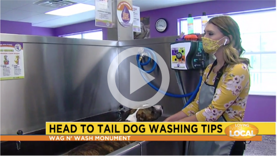 pet franchise dog wash