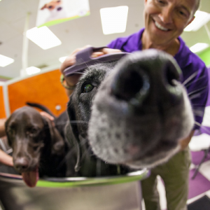 Pet supplies franchise in the news!